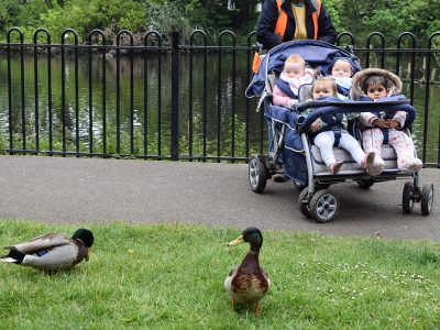 bambini-puppy-park-duck